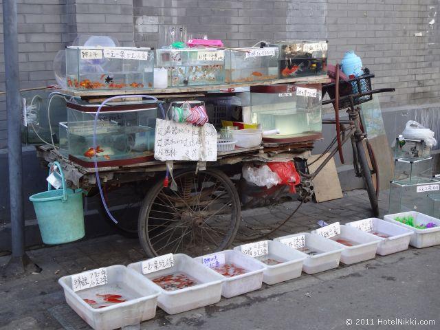 北京 ダブル ハピネス ホテル、胡同で金魚が売っていました